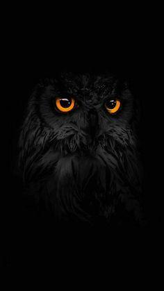 Wallpaper Samsung Galaxy - dark, black owl, iPhone Wallpaper:: Black Wallpapers: Cool Backgrounds app has b. - Wallpapers World Owl Wallpaper Iphone, Tier Wallpaper, Dark Wallpaper, Animal Wallpaper, Mobile Wallpaper, Iphone Wallpapers, Colorful Wallpaper, Flower Wallpaper, Wallpaper Quotes