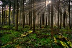 Magic! between the trees by fatboyke (Luc), via Flickr