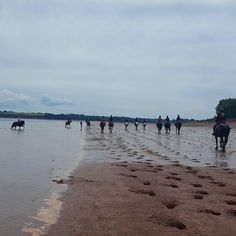 From @eastcoast_seeker  Running with the tide ..neat event :) #blomidon #beach #horses #horseriding #theweathernetwork #summer #beatthetide #igers_novascotia #getoutside #ig_great_shots_canada #splash #run #thecanadiancollective #sandybeach #fifty_shades_of_nature #random_acts_of_photography #tv_clouds #horsebackriding #photooftheday