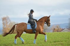 Fantastisk hest søker forrytter   FINN.no Horses, Animals, Animales, Animaux, Animais, Horse, Words, Animal