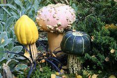 Mushrooms...Squashrooms? by SarahIvy