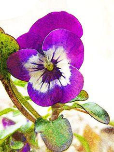 Purple Viola Digital Art by Robin Hewitt - Purple Viola Fine Art Prints and Posters for Sale