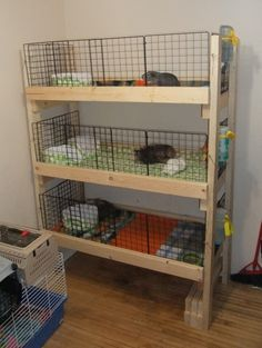 Guinea Pig Cages -- great use of vertical space. But I'm thinking it would be a bit stinky in that room....