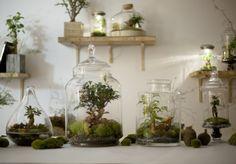 DIY : notre mode d'emploi du terrarium - elle deco