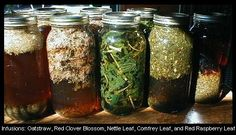 My newly updated Nourishing Herbal Infusions Course is now at Teachable!   In this course you will learn: * How to make and use nourishing herbal infusions. * About the healing properties of herbs used in the Wise Woman Tradition. * Simple steps to increase your health and vitality. * How to build a relationship with the plants and use them safely. * How herbs and food can keep your bones healthy and your body flexible, and More!