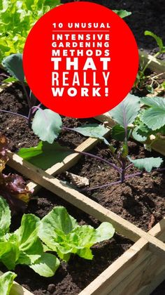 Which of these 10 intensive vegetable gardening methods will you try?