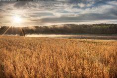 Peltomaisema - pelto viljapelto vilja viljelys viljely maanviljely maatalous alkutuotanto vainio kesä aamu kesäaamu maaseutu peltomaisema maisema maalaismaisema pilvet elokuu loppukesä vesi lampi usva sumu aamusumu sumuinen aamu-usva kaura kaurapelto kaunis aurinko auringonnousu auringonpaiste