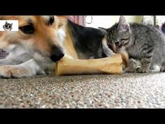 Ultimate Cats & Dogs   Friends For Life Compilation 2014