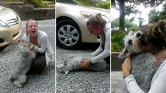 Dog faints from 'overwhelming joy' as he's reunited with owner after two years