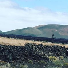 #spain #kanaren #canarias #palmen #lanzarote #futeventura #instatraveling #instagram #picture #jameosdelagua #jameosdelagualanzarote #palmtrees #cesarmanrique #teguise #plazza #spain #elgolfo #edelsteine #ovolin #vulkan #vulcano #vulcans #timanfaya #timanfayanationalpark #vulkan