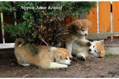 Machiko met zijn broertjes spelen