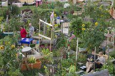 Urban Gardening: Kolonie der Wucherkisten – Seite 3   Lebensart   ZEIT ONLINE