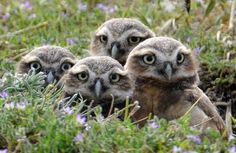 it's the four owls again!
