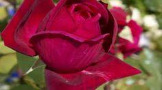 "Ernesto Cortazar - ""Secrets of my heart"". Relaxing Gif, Relaxing Music, Piano Music, My Music, Calming Songs, Spiritual Music, Michael Bolton, Classic Jazz, Romantic Music"