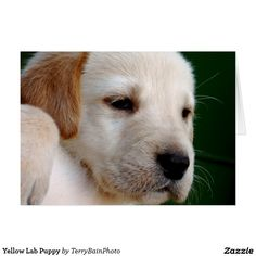 Yellow Lab Puppy Card