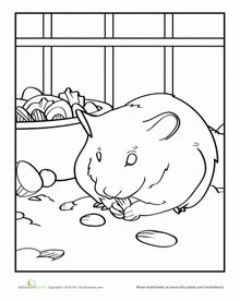 Top 25 Free printable Hamster Coloring Pages Online | School, Pet ...
