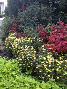 Another flower garden