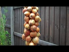 Develop A The Moment Upon A Dream Fairy Tale Birthday Bash String Onions and Garlic - Great Way To Store Long Term Hanging With Good Air Circulation. Drying Onions, Storing Onions, Onion Storage, Food Storage, Harvest Onions, Onion Strings, Companion Gardening, Fruit Preserves, Fruit And Veg