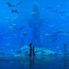 the Ambassador Lagoon is a window into the wonders of the ocean, and the centre-piece of Atlantis Hotel in Dubai, with over 250 species of fish and sea creatures. Dubai Hotel, Atlantis Hotel Dubai, Hotel Subaquático, Dubai Uae, Dubai Trip, Dubai Golf, Dubai City, Cristo Corcovado, Travel Around The World