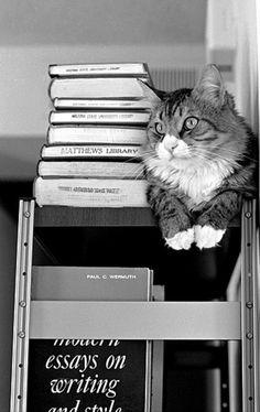 Matthews Library Cat at Arizona State University - 1968  (via Gene Wilburn )