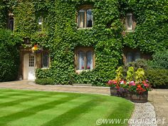 Hanging baskets, window flowers, large flower pots, Virginia Creeper covered walls, Old Court, Selwyn College, Cambridge, England