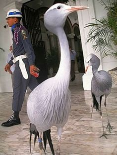 The Presidential Palace of Panama Herons