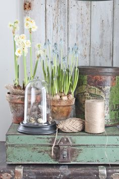 Create a small vignette with spring bulbs and vintage accessories. Vintage Garden Decor, Vintage Gardening, Vibeke Design, Garden Bulbs, Spring Bulbs, Deco Floral, Diy Décoration, Garden Styles, Cottage Style