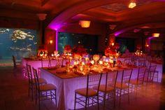 wedding reception at Atlantis ... with an aquarium as the backdrop ... so cool.