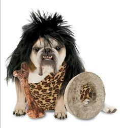 1000 images about dog costume on pinterest dog halloween costumes