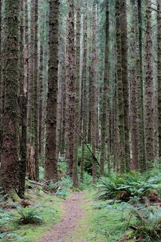 Second growth forest, where the younger trees are almost eerie in their symmetry. Arch Cape to Cape Falcon trail, Oswald West State Park, Oregon | Gardenista