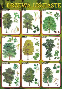 Preschool Science, Science For Kids, Tree Id, Polish Language, Kids Logo, Kids Education, Animals For Kids, School Projects, Kids And Parenting