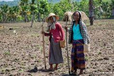 La Caja de Pandora: Trabajo femenino pasa desapercibido en Timor Orien... Timor Oriental, Southeast Asia, Pandora, Style, Fashion, Girly, Snare Drum, Step By Step, Women