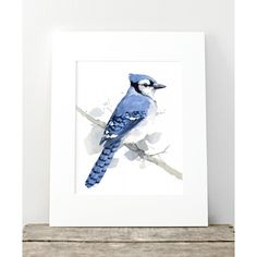 Downy Woodpecker - Watercolor by david scheirer, Print Watercolor Bird, Watercolor Illustration, Watercolor Paintings, Watercolors, Bird Paintings, Navy Blue Wall Art, Christmas Paintings On Canvas, Watercolor Techniques, Blue Jay