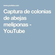 Captura de colonias de abejas meliponas - YouTube