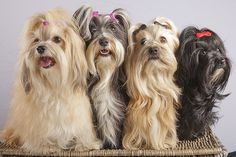 4 dogs on a laundry basket - http://www.1pic4u.com/blog/2014/09/28/4-dogs-on-a-laundry-basket/