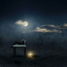 Art by Christine Ellger