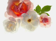 Use of Flower Symbols in A Good Feng Shui Home or Office – By Rodika Tchi – 10 May, 2014 – feng shui flower symbols - Feng Shui Basics, Feng Shui Principles, Feng Shui Symbols, African Cats, Lucky Symbols, Flower Symbol, Where The Heart Is, Love Letters, Spring