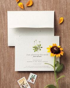 These save-the-dates actually sprout wildflowers!