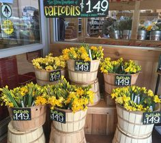 Happy Friday!! This is my favorite display at Trader Joes!! Daffodils are my favorite flower  of all time!! Guess who bought herself some!! ME!!!! 17 days till my big milestone birthday!! I'm so excited!! #inspiration #flowers #daffodils #daffodilsaremyfavorite by kreativekymona