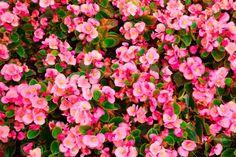 Decora tu hogar con estas 9 coloridas flores que crecen en la sombra - IMujer