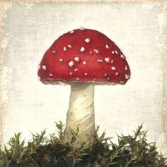 Bild Gemälde Pilz Fliegenpilz Shabby Chic rot Landhaus Vintage Thomas Rolly