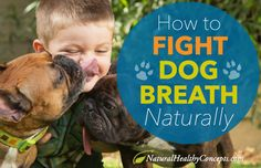 Need some help cleaning up your dog's teeth? Try out these natural tips for brushing and beating bacteria for good dental health.