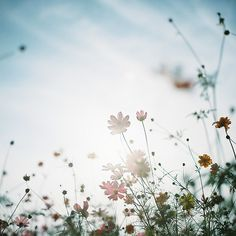 my heart.. by sunao-films, via Flickr