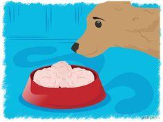 Aprende a preparar tu propia comida para perro vía es.wikihow.com