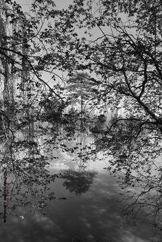 Sur les rives du Cher Photo ©2013- Françoise Larouge