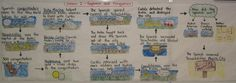 Flow Charts for organizing events in Social Studies/science...have students create as a end of unit project