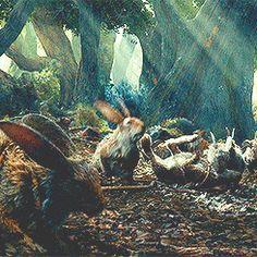 Rhosgobel Rabbits!