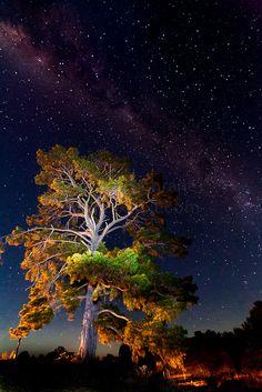 Vía Láctea sobre el árbol. Foto tomada en la histórica ciudad minera de oro de Hill End - Australia