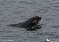 L122 plays in the waves, with mom L91 Muncher near by PC to Clint Rivers