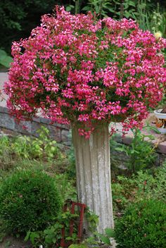 Elevate a potted plant by setting on a post or pillar.  Pretty!